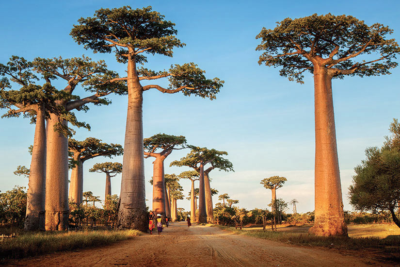 Escale à Madagascar